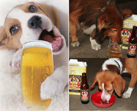 http://kamanime.ru/img/news/beer2.jpg